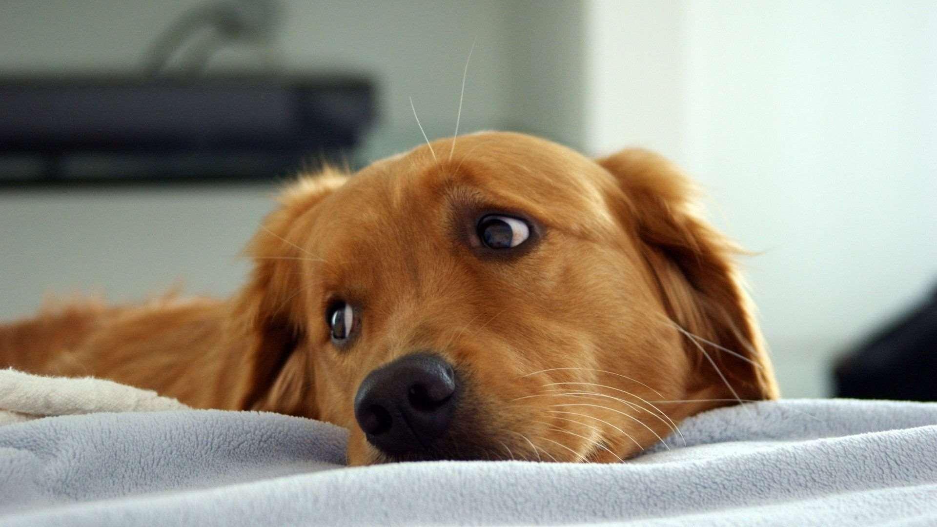 сколько живет собака