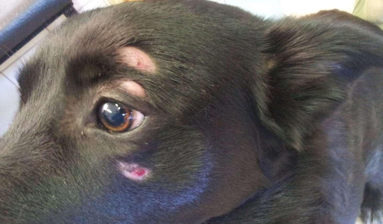 симптомы лишая у собаки