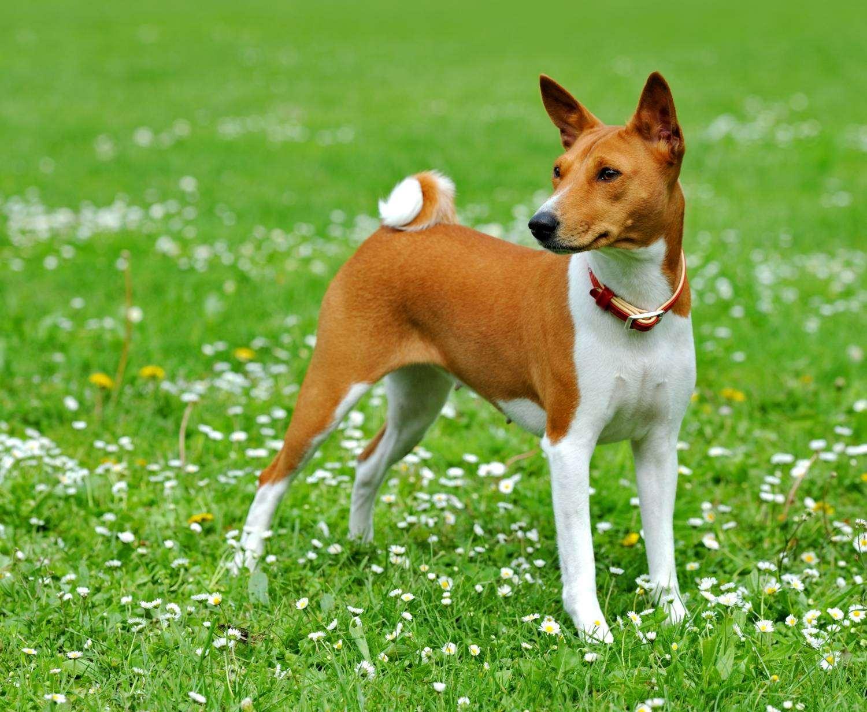 стерилизованная собака
