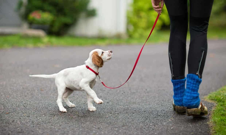щенок на поводке на улице