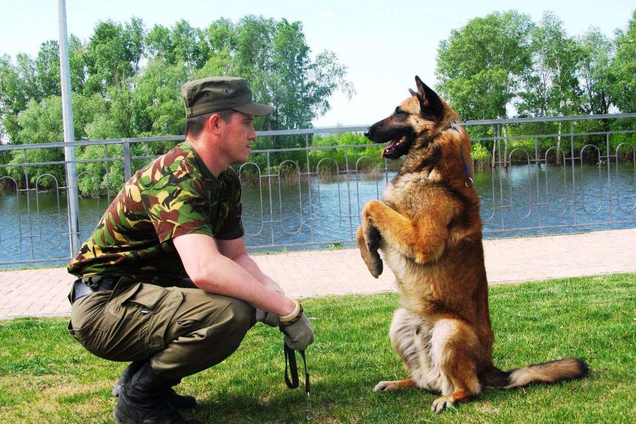 команда для собаки служить