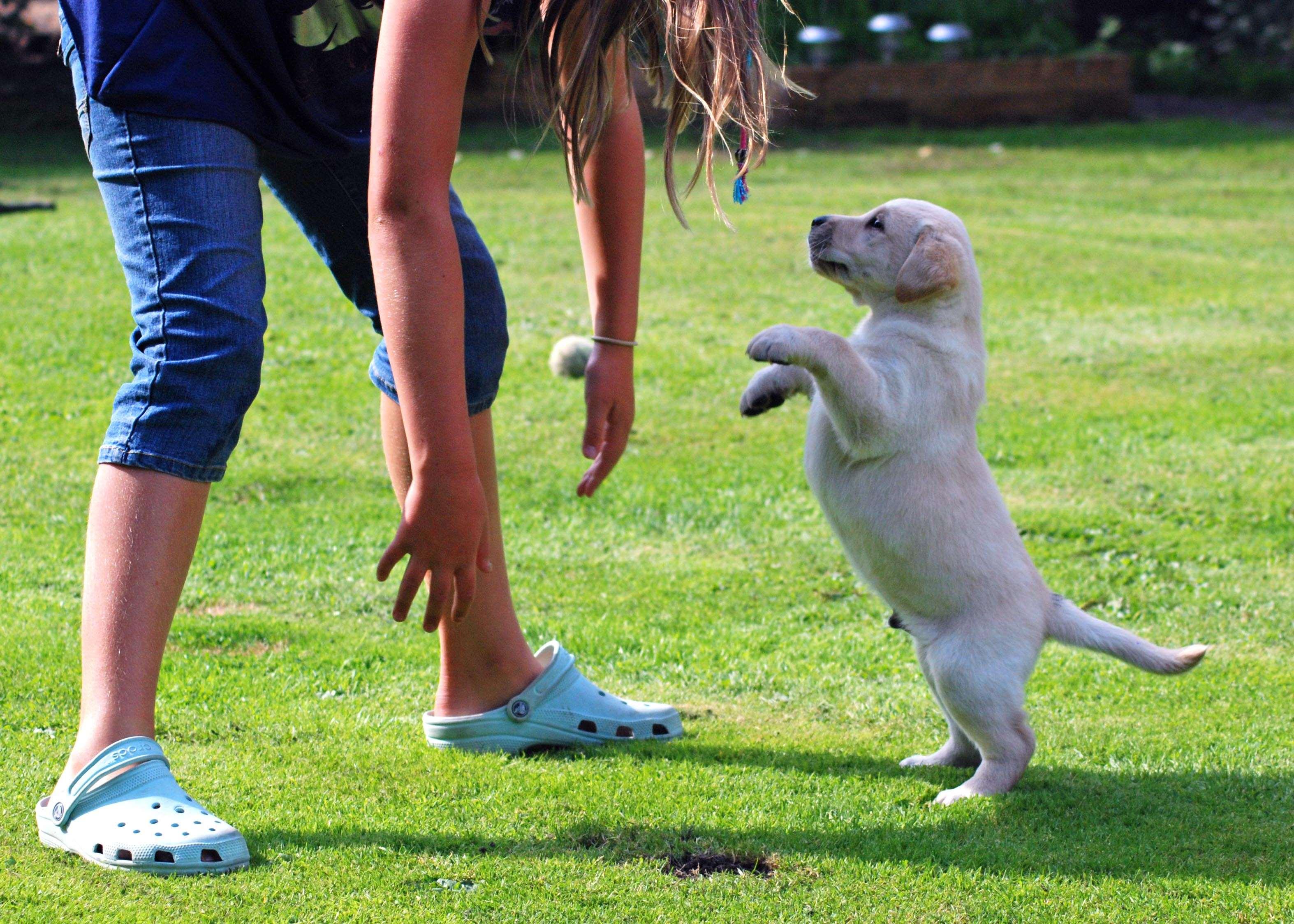 щенок прыгает на людей