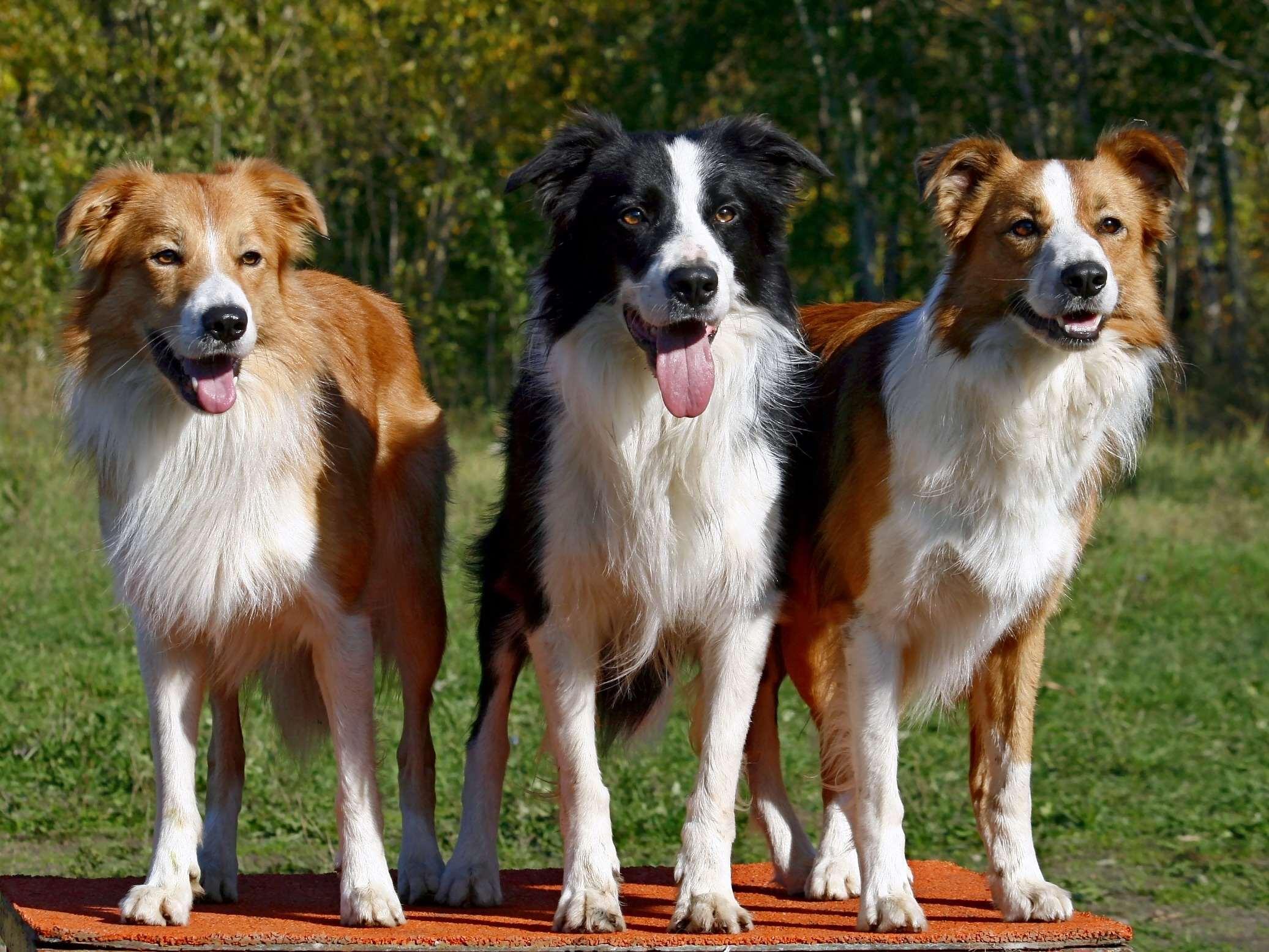 кастрированные собаки