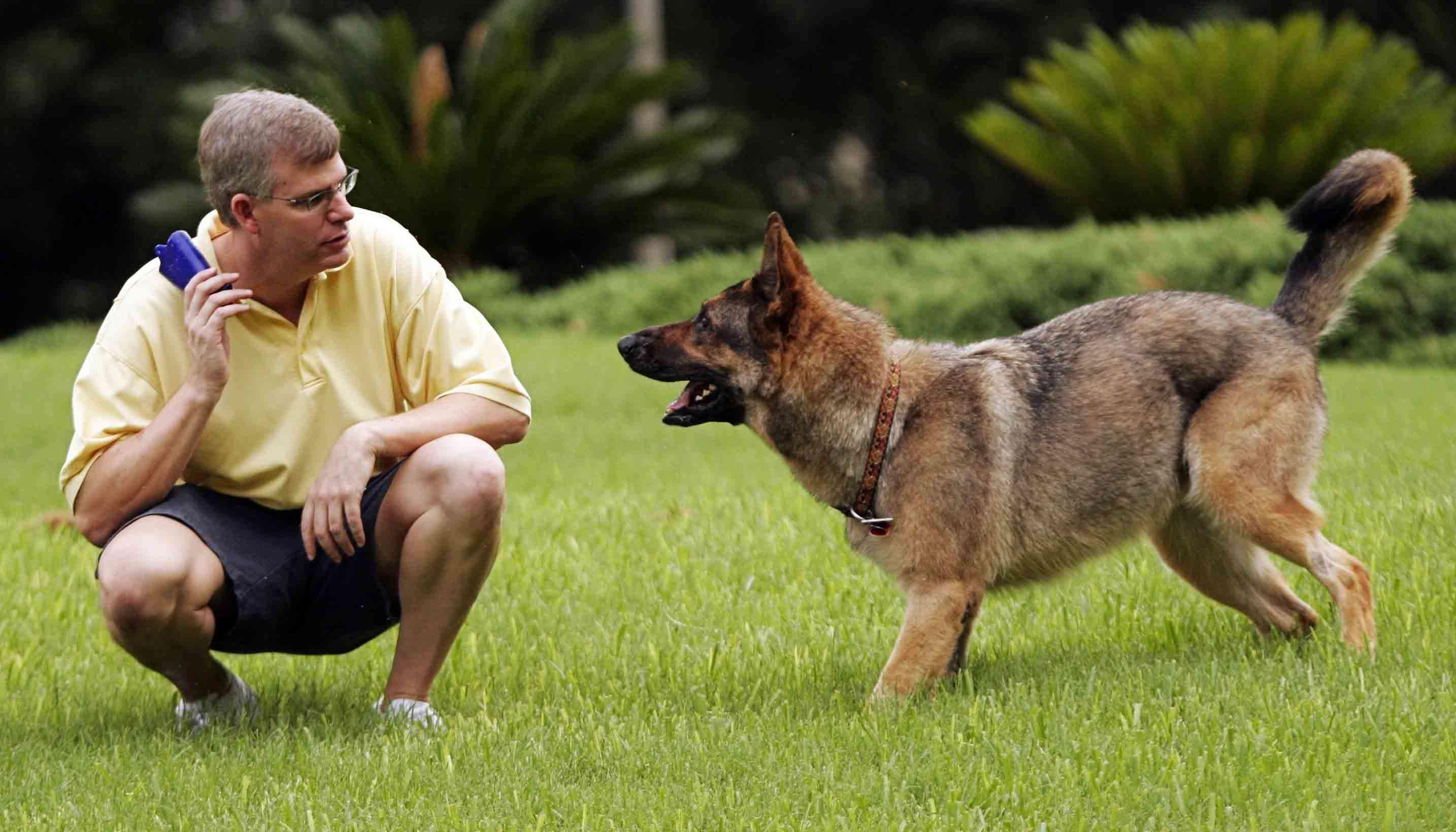 команда для собаки апорт