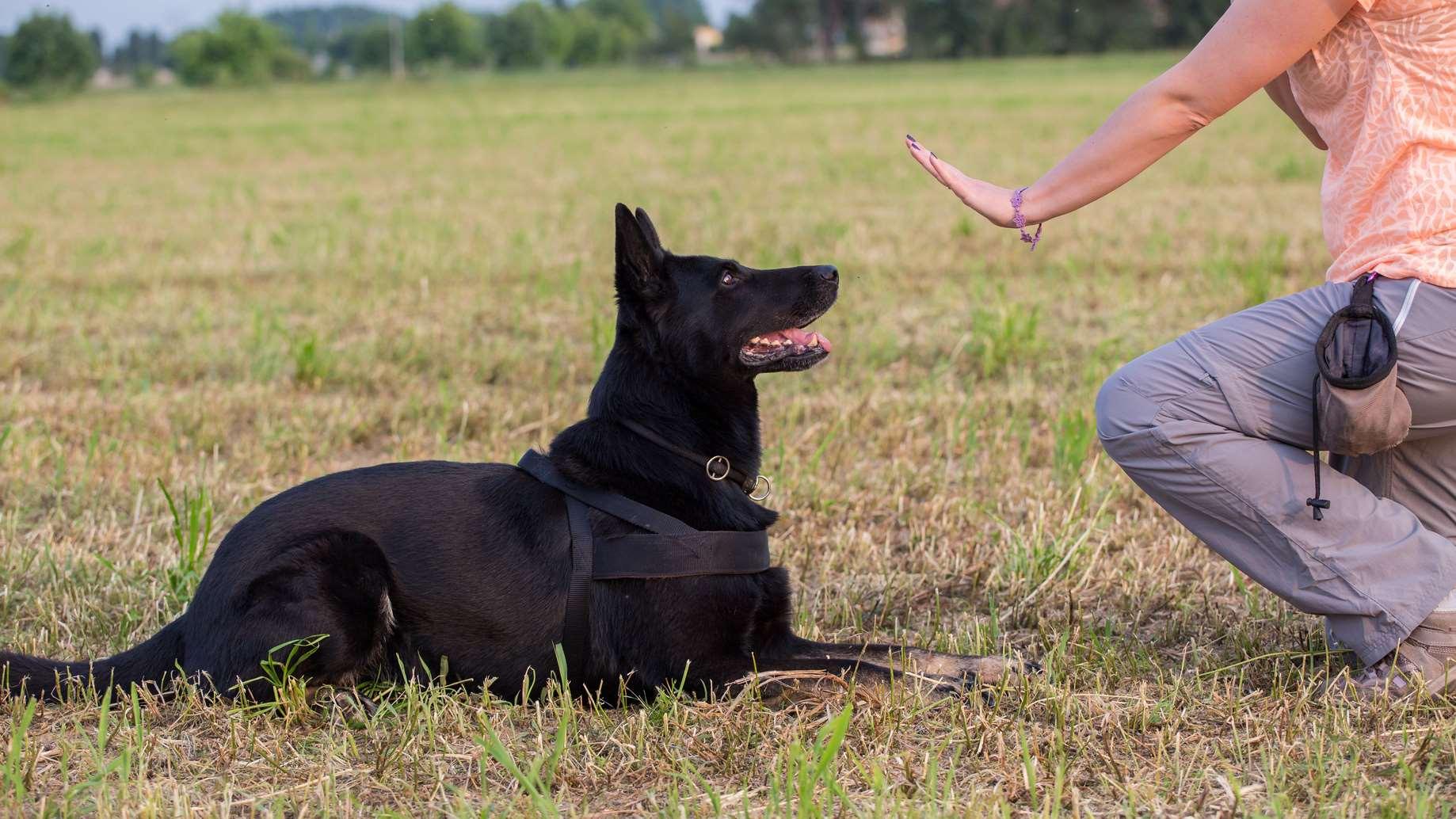 команда для собаки лежать