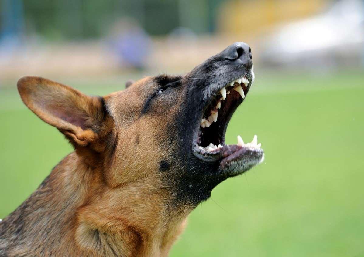 злая собака лает
