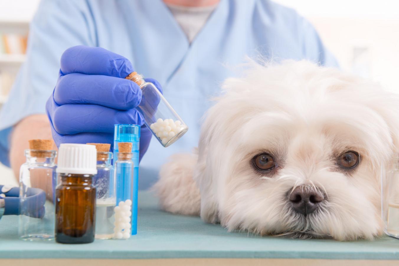 лекарства от аллергии собак