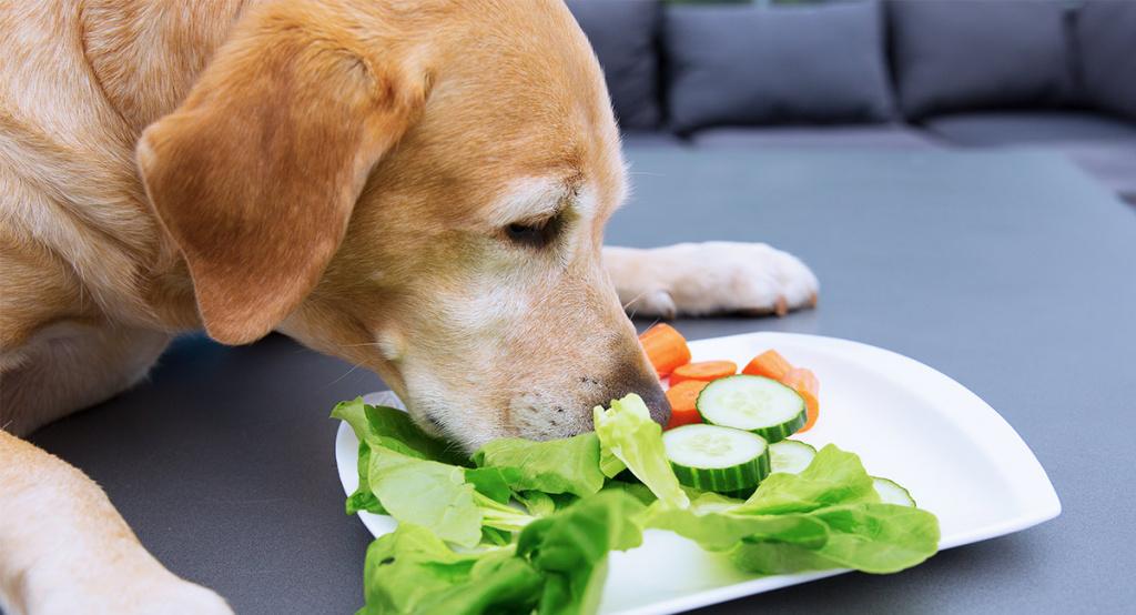 Какие овощи можно собакам