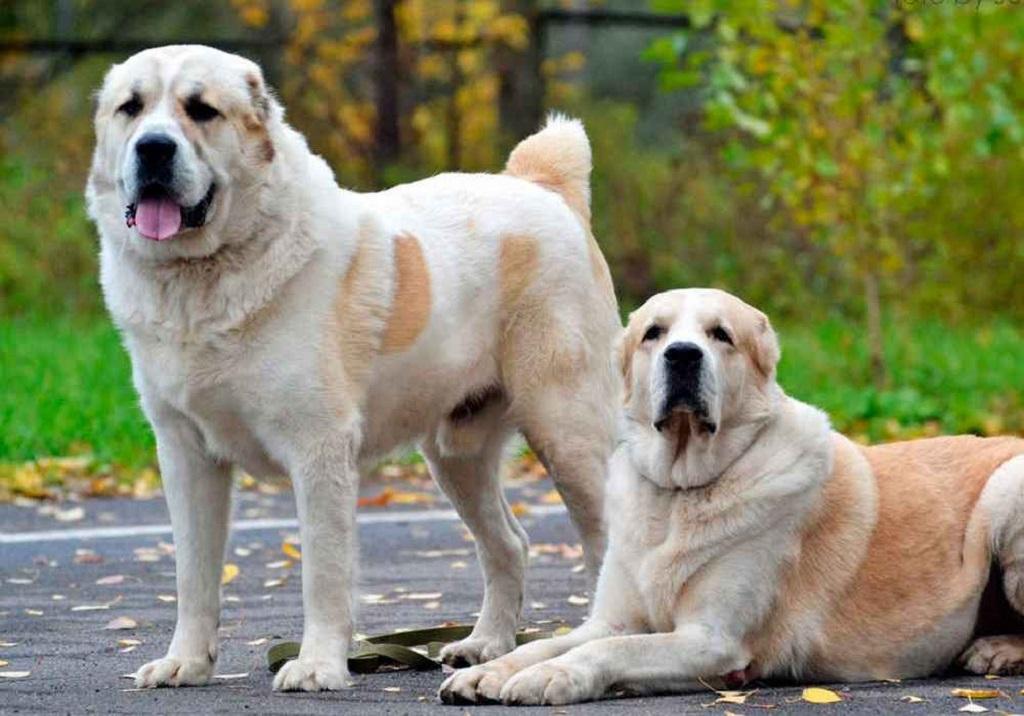 Какая собака самая сильная