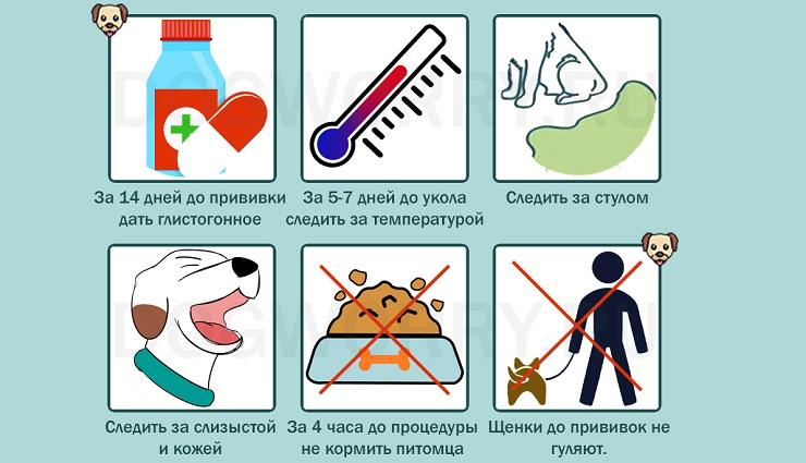 Сколько прививок нужно собаке