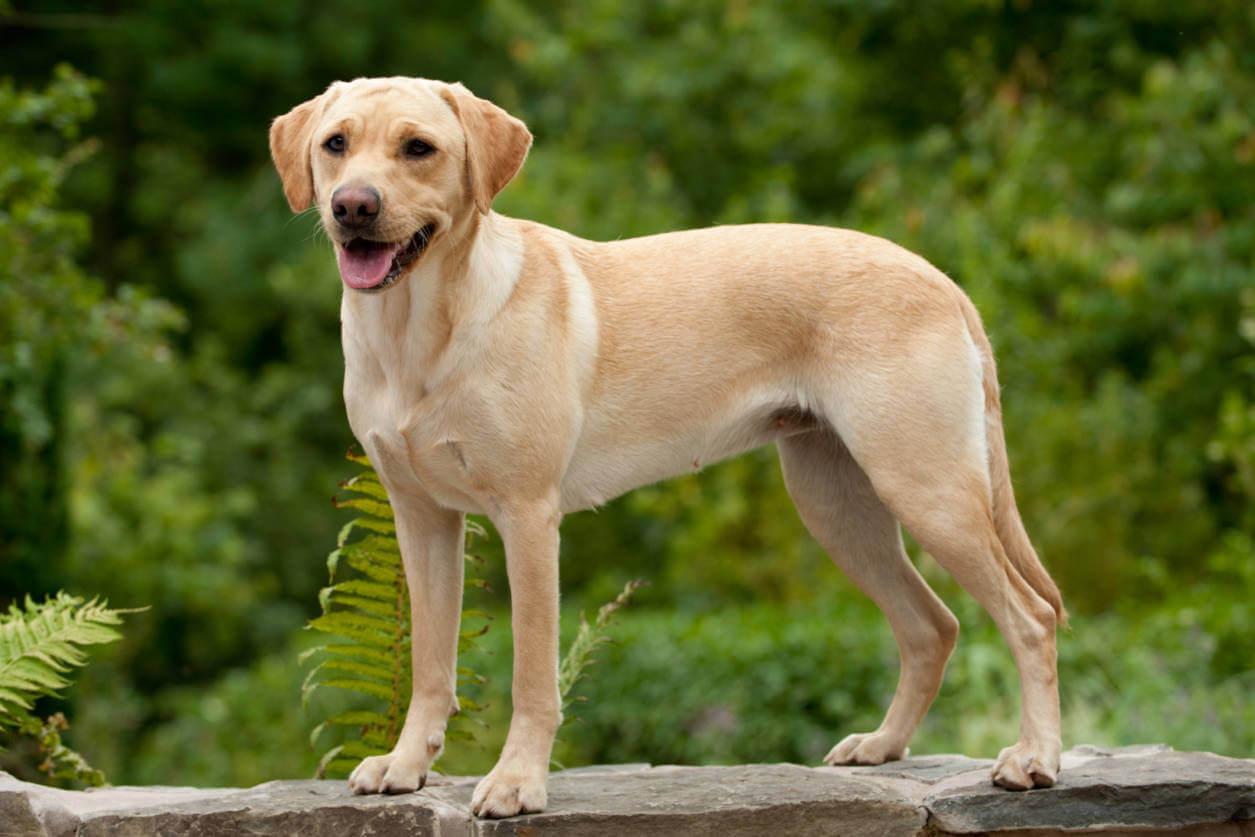 Какая самая лучшая собака