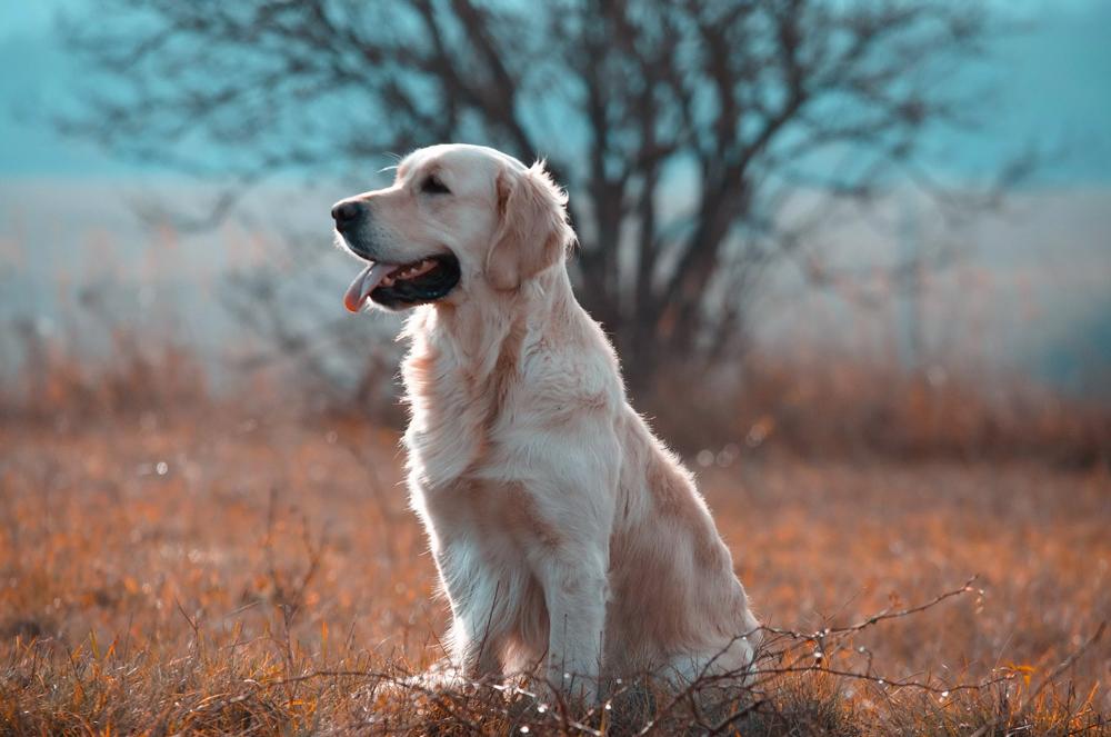 Какая собака самая умная
